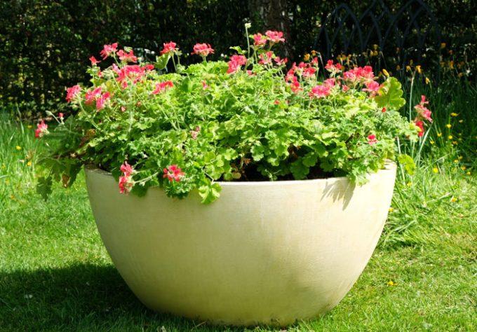 Crucible Bowl Planter