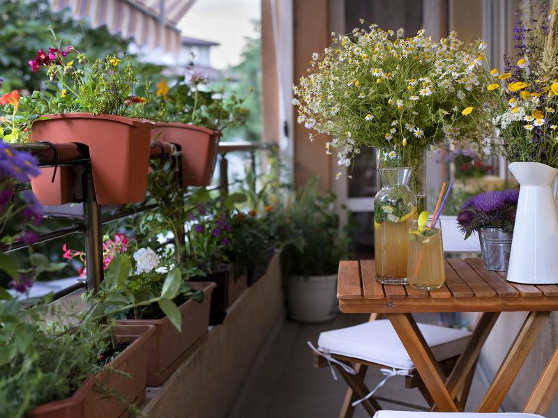 urban gardening on a balcony