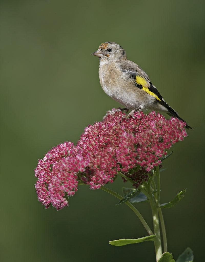 bird sitting on plant in winter