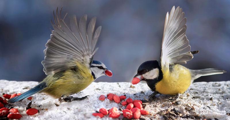 birds feeding