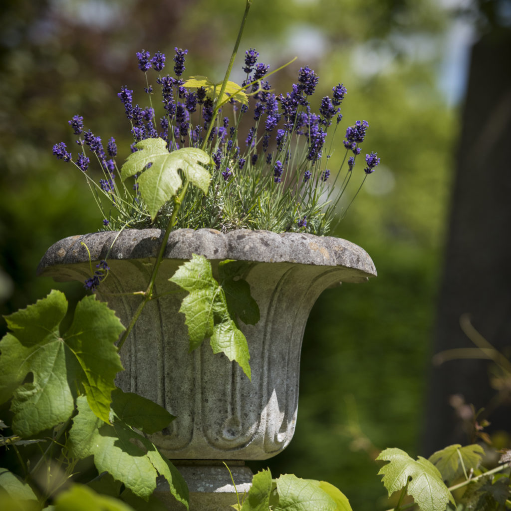 a haddonstone planter with blousy flowers