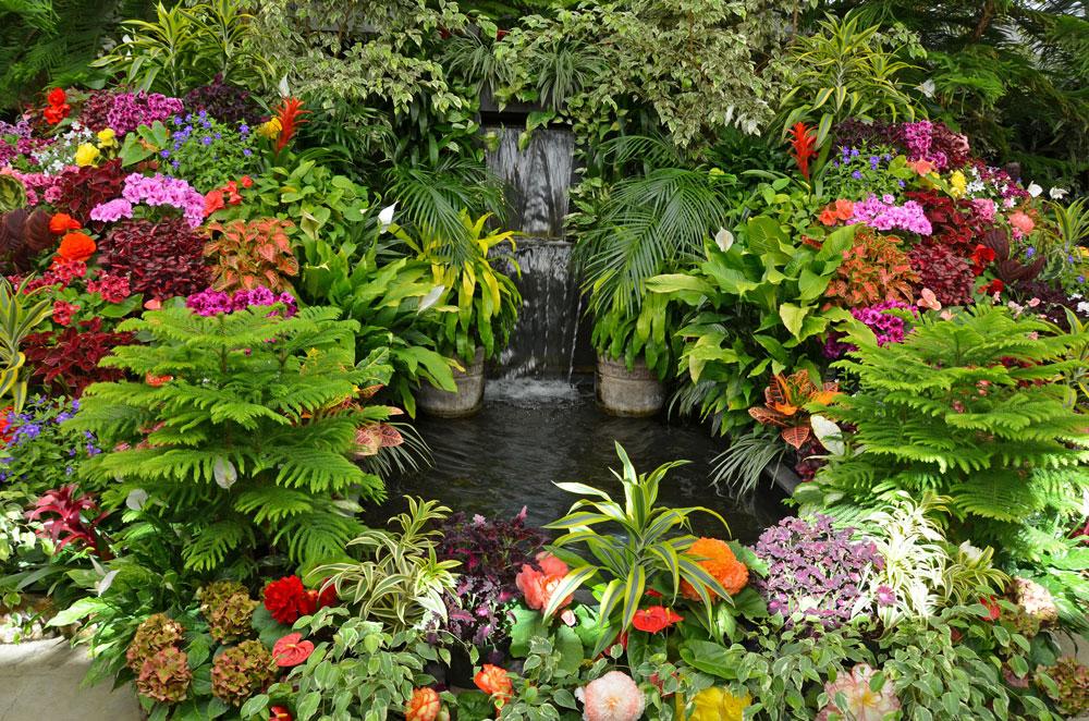 A trocpical garden