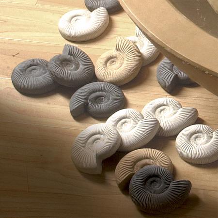 Arcadian Mini Ammonite - Pack of 20
