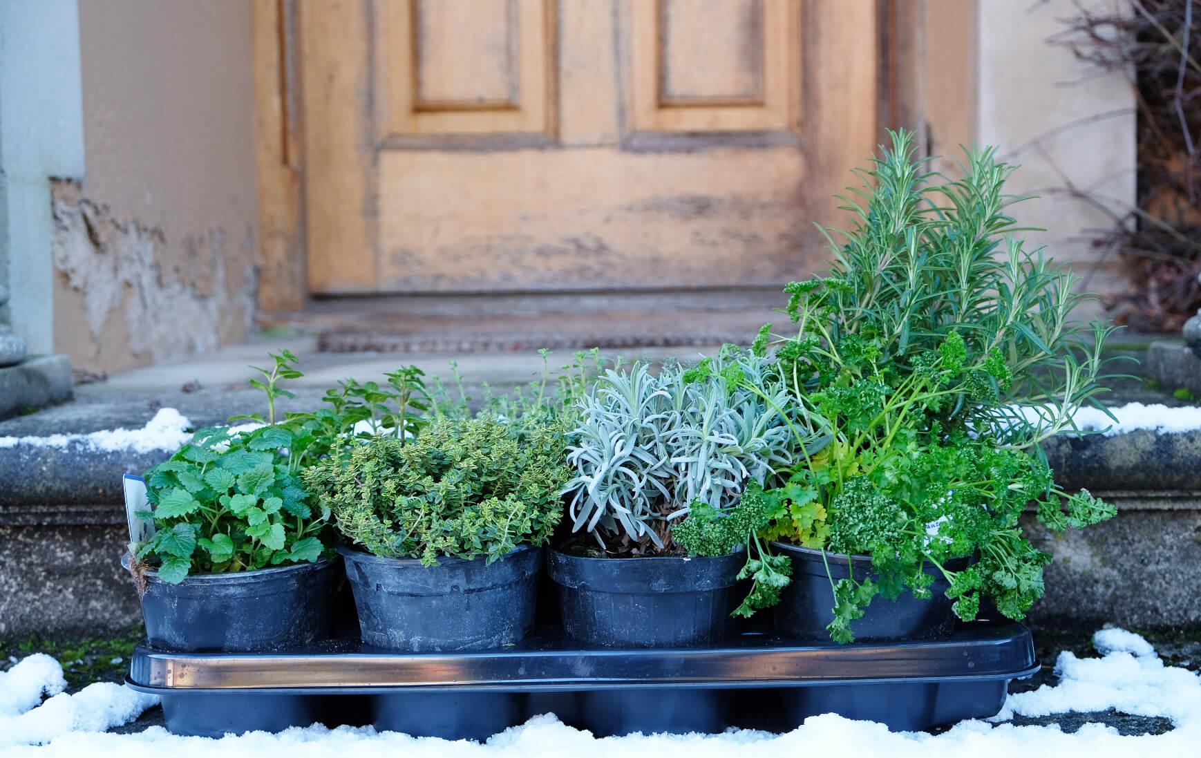 winter planting