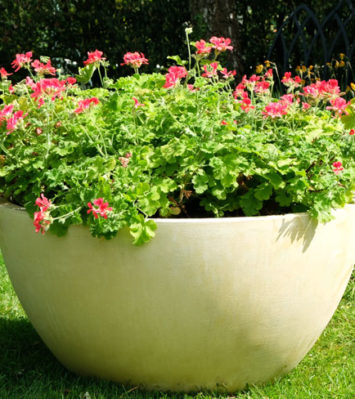 Crucible Bowl Planter