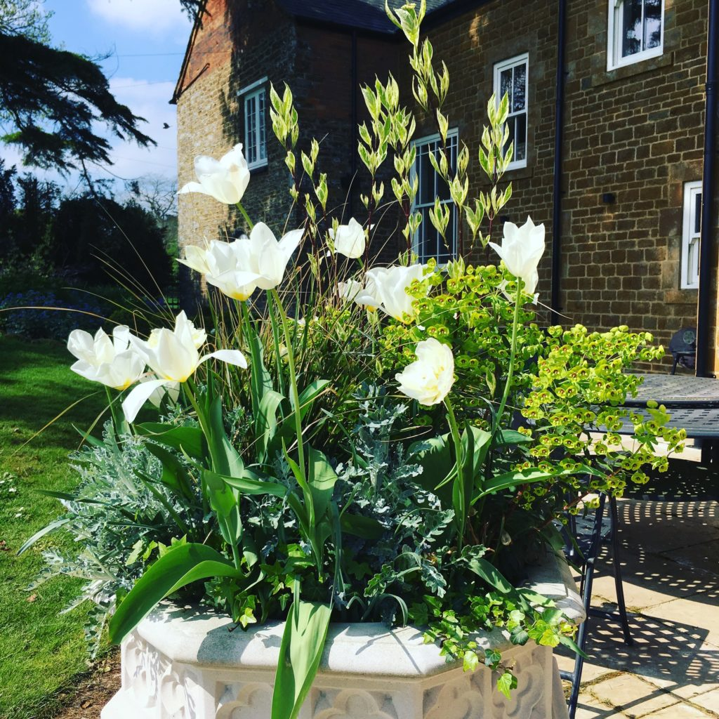 seasonal structure is created using pheasant grass and tulips in a Haddonstone Gothic Urn