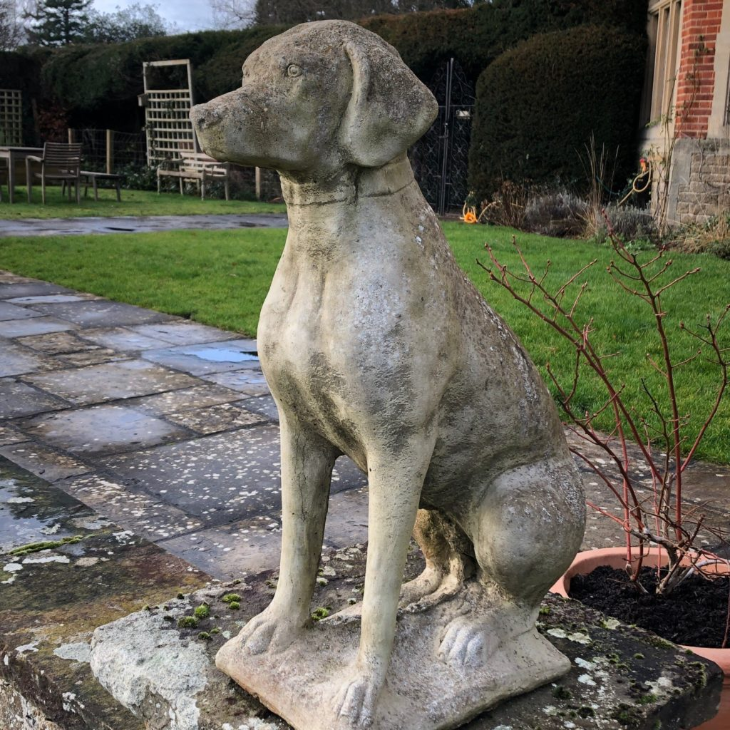 the lurcher dog that carole annett mentions in her guest blog